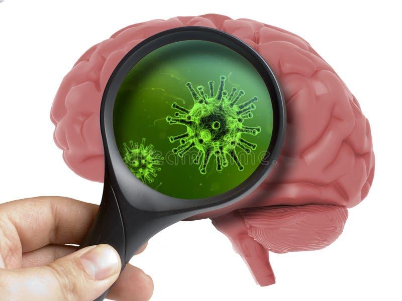 Brain Analyzed umano con il microbo batterico d'ingrandimento del virus dentro isolato immagini stock libere da diritti