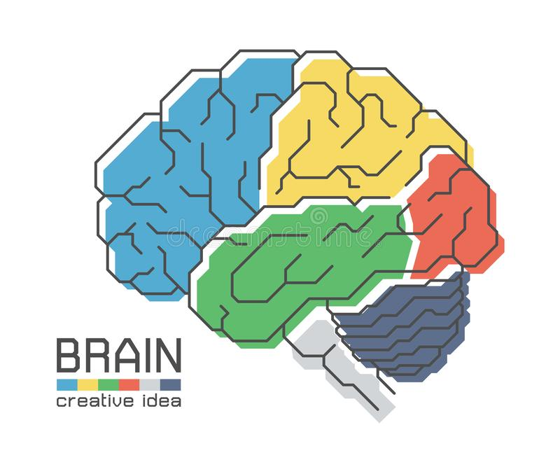 Brain anatomy with flat color design and outline stroke . Frontal Parietal Temporal Occipital lobe Cerebellum and Brainstem . stock illustration
