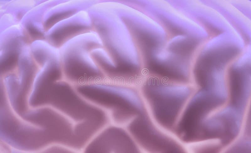 Brain background stock photos