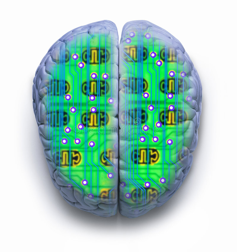 Brain Computer. Computer circuit board combined with a human brain royalty free illustration