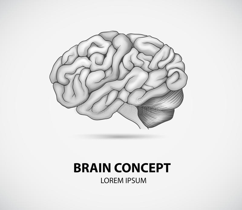 Brain concept. Concept of human brain on white royalty free illustration