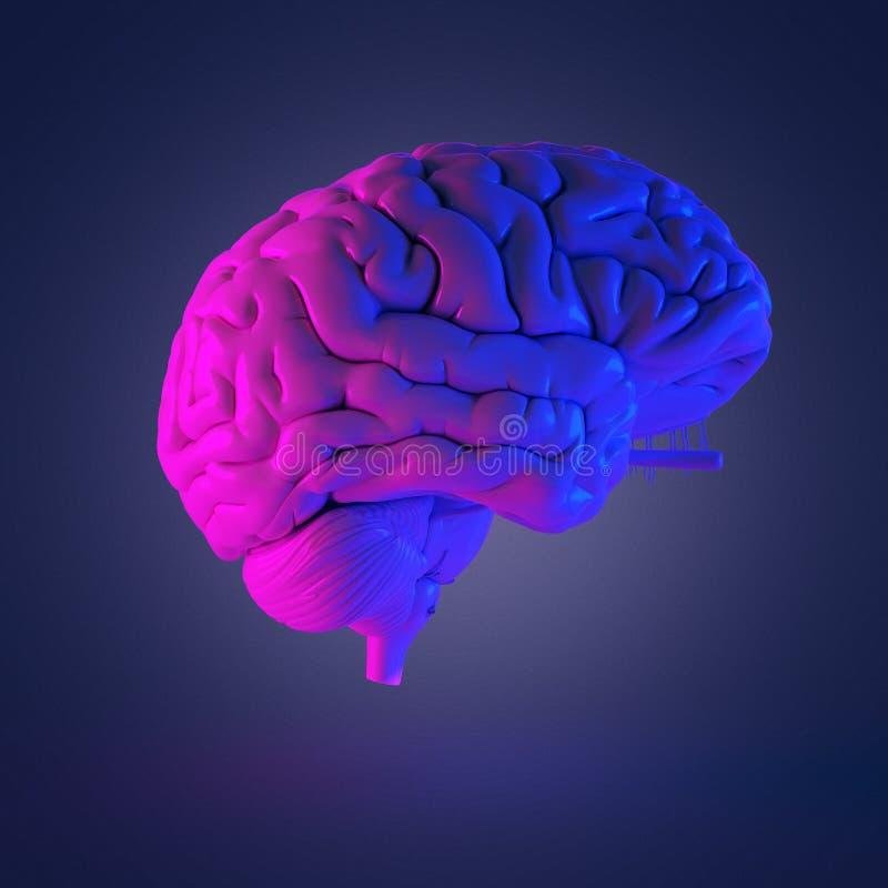 a brain royalty free illustration