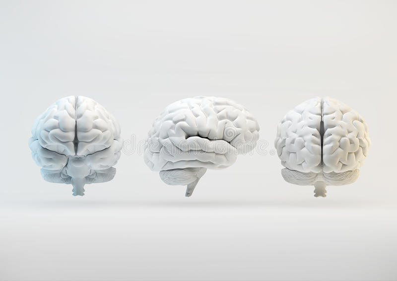 Download Brain From Different Angles Royalty Free Stock Image - Image: 37767536