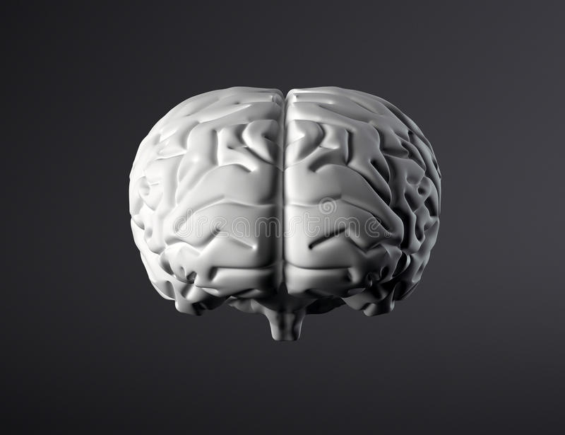 Download Brain front view stock illustration. Illustration of hemisphere - 12323699