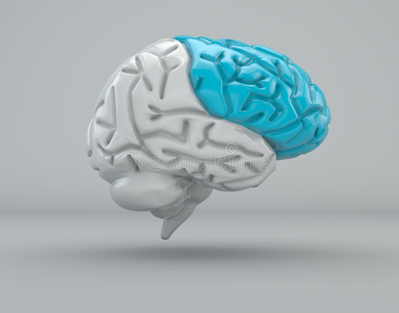 Brain, frontal lobe, division. Brain division organ structure on a grey background vector illustration