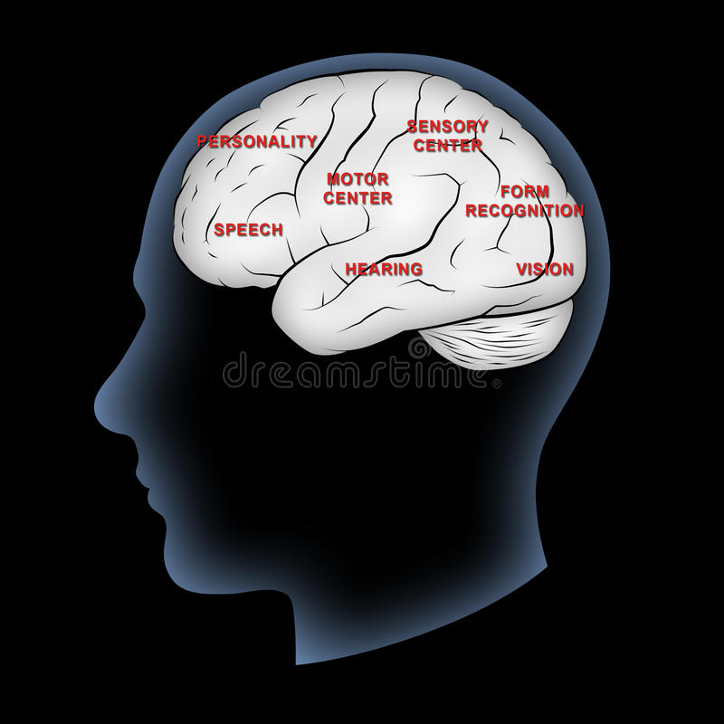 Brain Functions. Human brain with functions labeled vector illustration