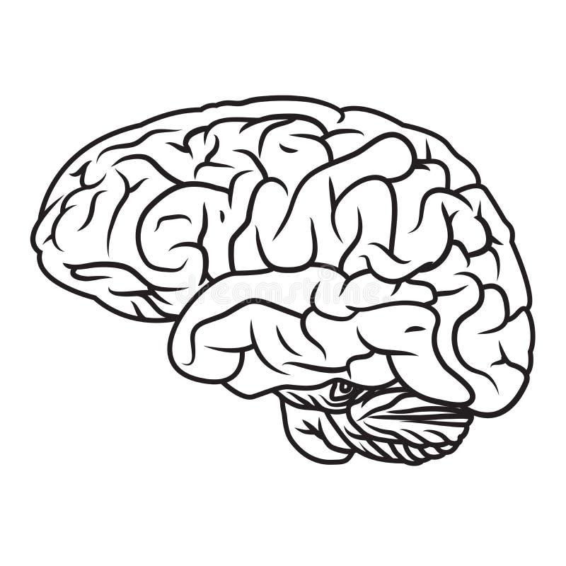 human brain coloring book download brain stock vector image 51203723 - Brain Coloring Book