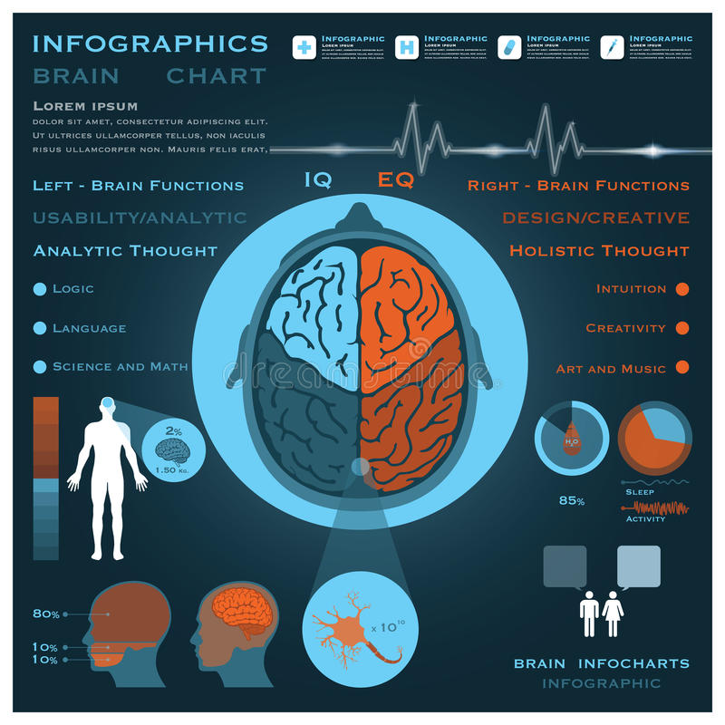 Free Brain Infographic Infocharts Health And Medical Royalty Free Stock Images - 38046029