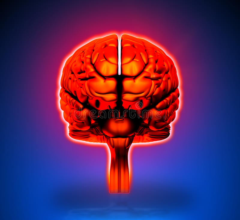 Brain - Internal organs vector illustration
