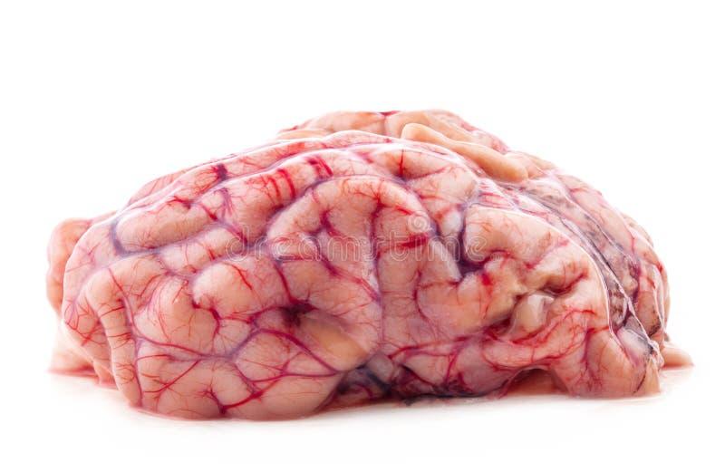Brain. Isolated on white background royalty free stock photo