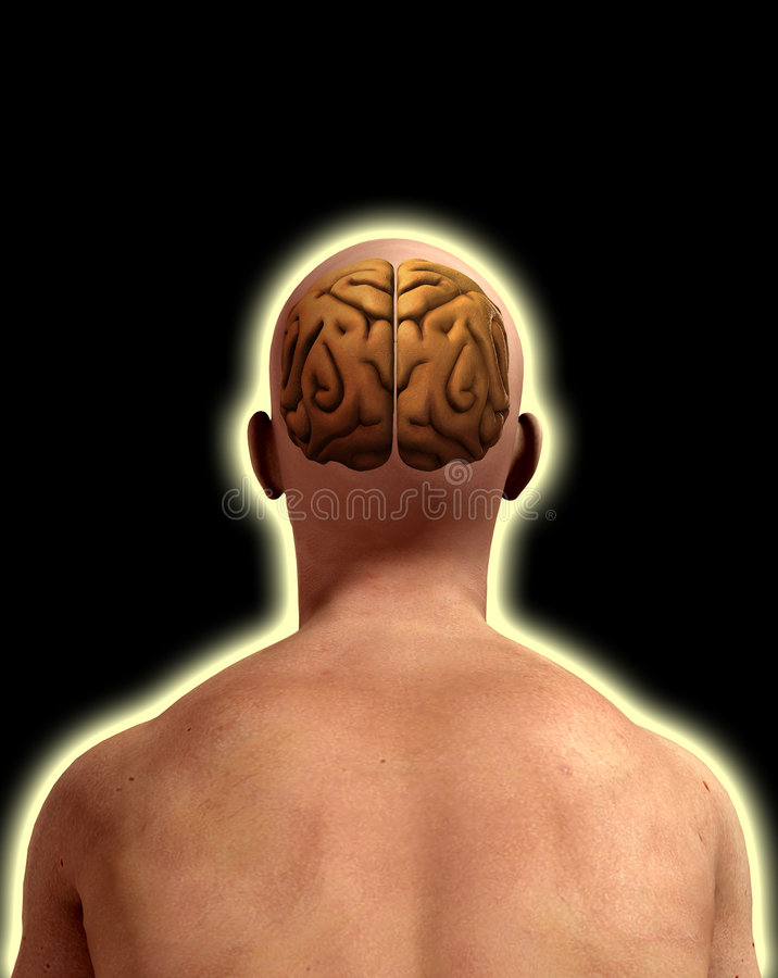 Download Brain In Male Head stock illustration. Illustration of concept - 7274950
