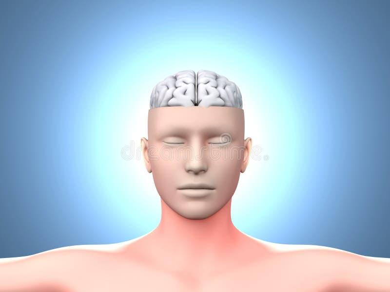 Download Brain man stock illustration. Illustration of neurology - 23981388