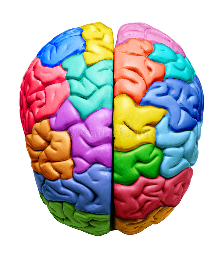 brain multicolored 免版税库存照片