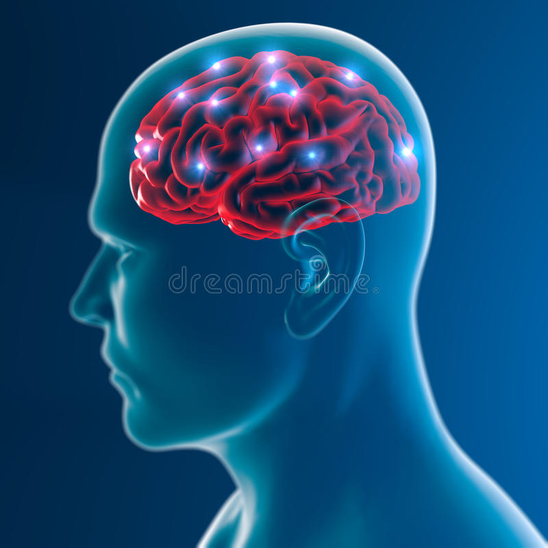 Free Brain Neurons Synapse Functions Royalty Free Stock Photography - 50004147