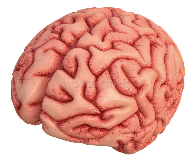 Brain Over White royalty-vrije stock afbeelding