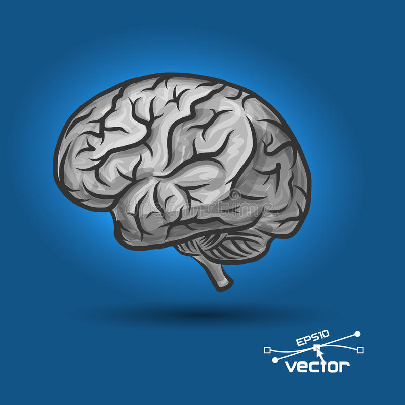 Brain of the person royalty free illustration