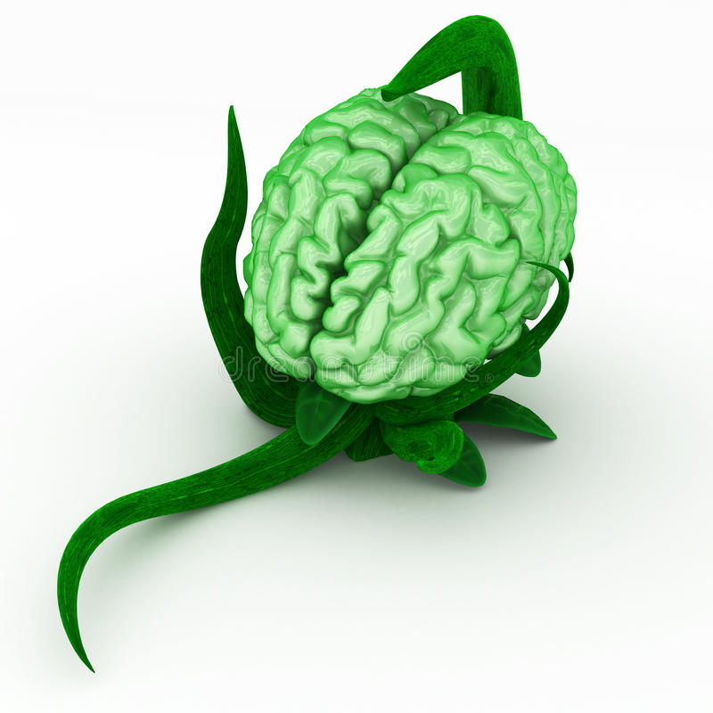 Download Brain Plant Stock Image - Image: 10095831
