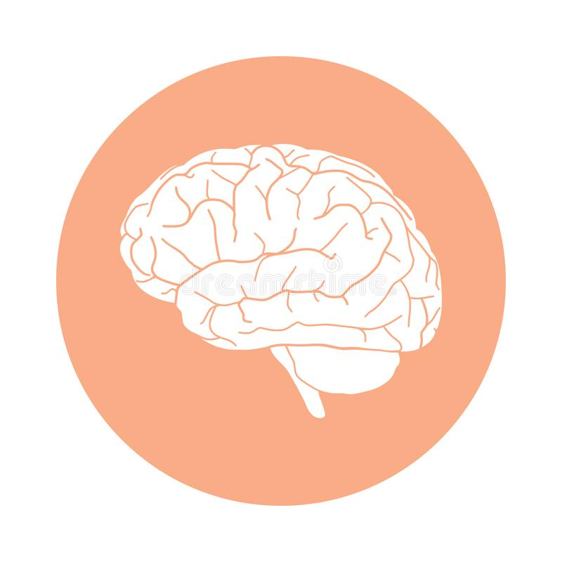 Human brain in the circle vector illustration