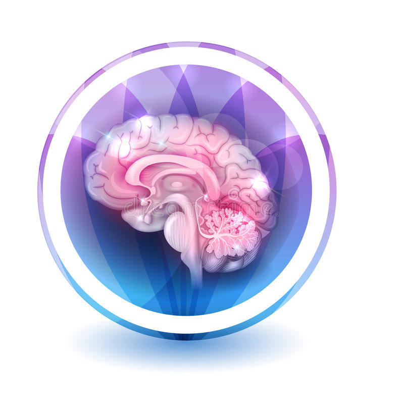 Brain sign. Round shape colorful overlay flower petals at the background vector illustration