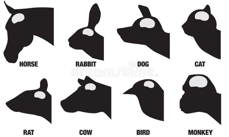 Brain Sizes animal ilustração royalty free