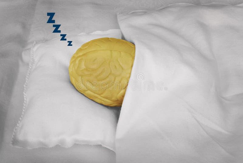 Brain sleeping stock photography