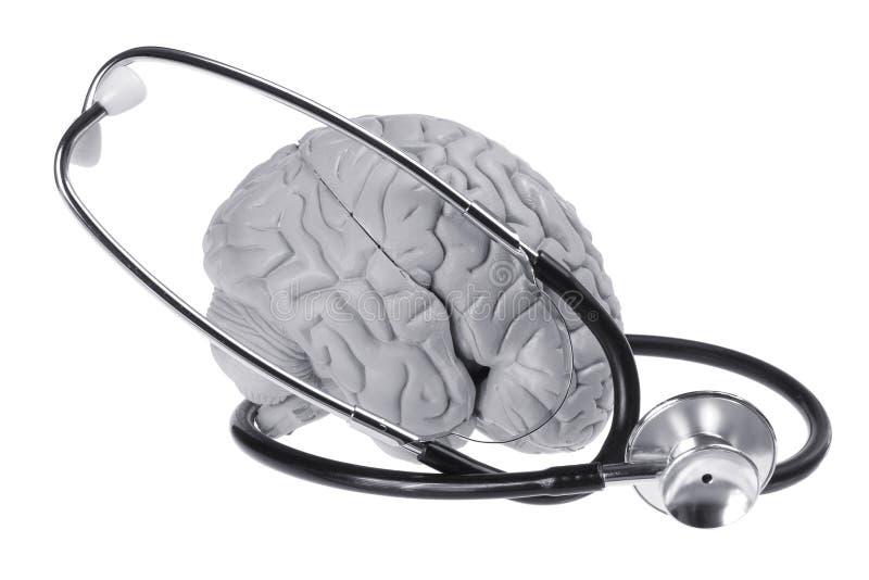 Brain Specimen and Stethoscope. On White Background stock photo
