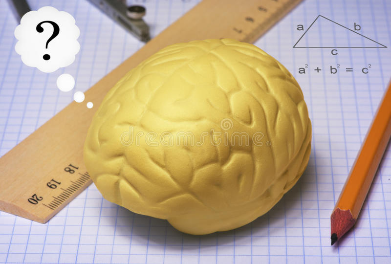 Brain studies stock photos