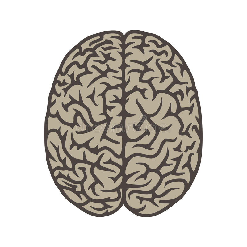 Brain top view illustration object stock photo