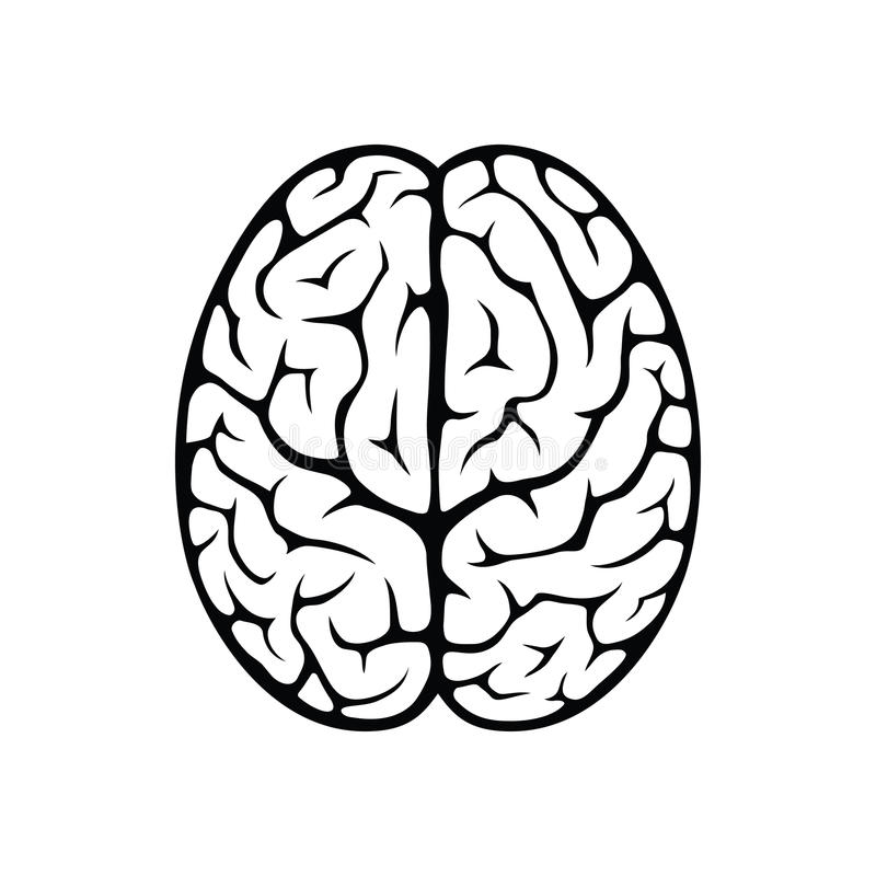 Brain top view vector illustration