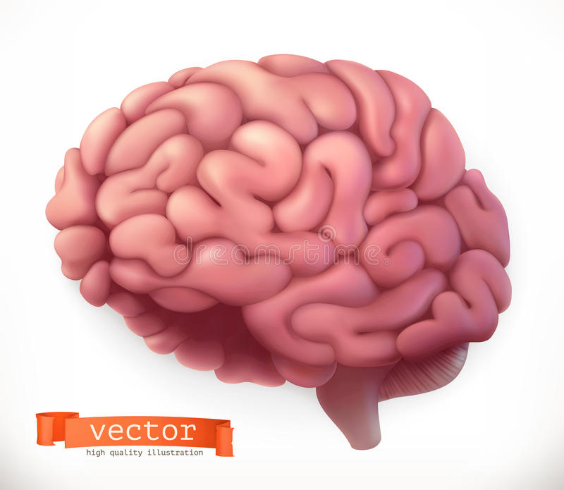 Brain. vector icon. Brain. 3d vector icon on white background vector illustration