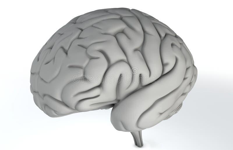 Brain on White vector illustration