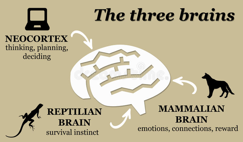 brained иллюстрация штока