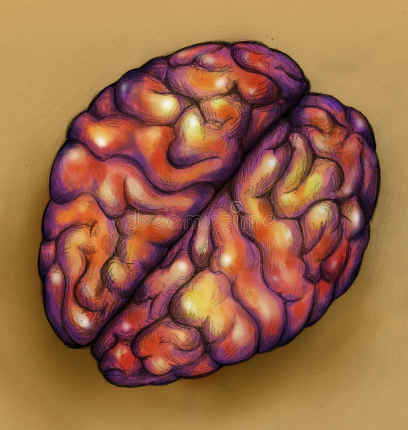 Brains - top view royalty free stock images