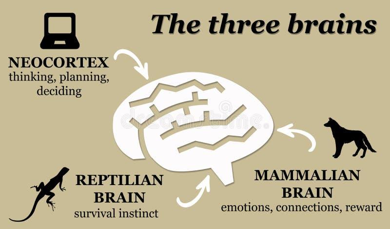 'brainstorming' απεικόνιση αποθεμάτων