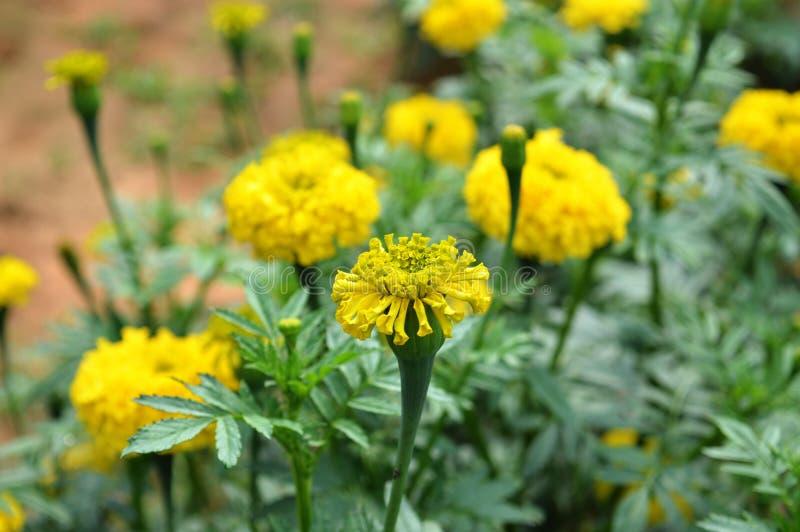 Brakowy kwiat zdjęcie stock