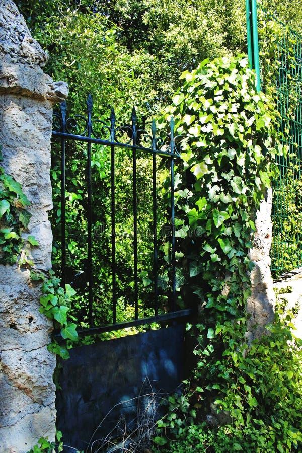 Brama z metalu z zielonymi, przerośniętymi winnicami, blokująca wejście zdjęcie stock