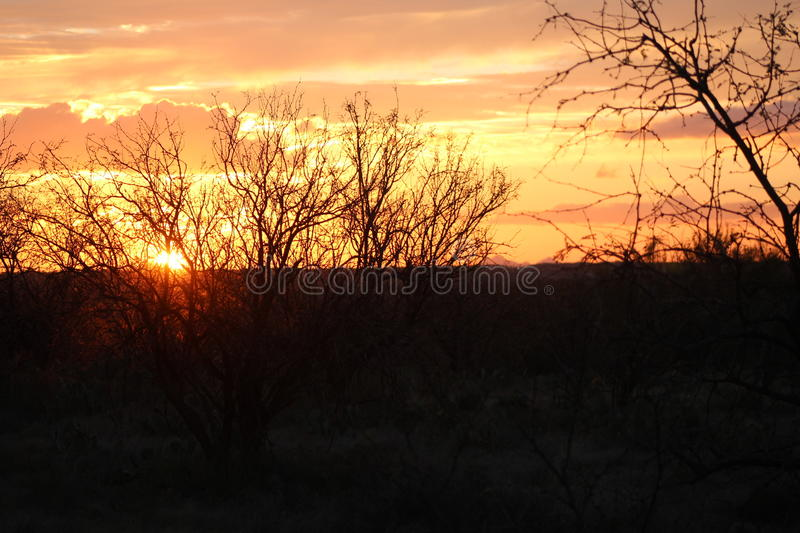 Brambles and Sunset royalty free stock photography