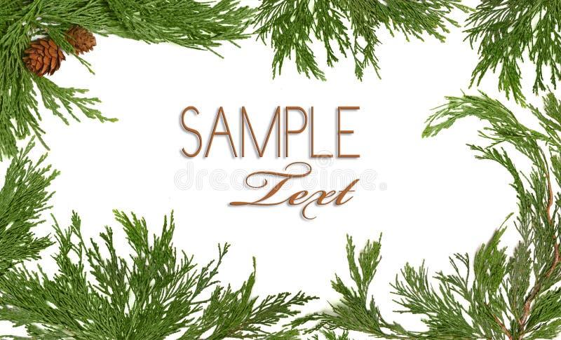 branc bożych narodzeń wiecznozielonego pinecone o temacie drzewo fotografia royalty free