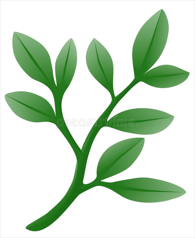 Download Branch stock vector. Image of plant, blade, artwork, food - 19878932