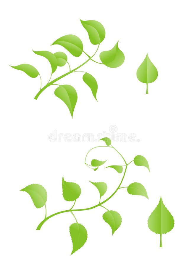 Download The branch stock vector. Image of floral, ornate, fresh - 4989216