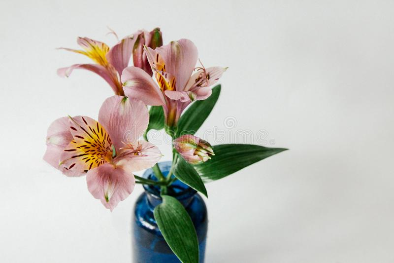 A branch of alstroemeria in a blue vase on a white background. A small and elegant bouquet. stock photos