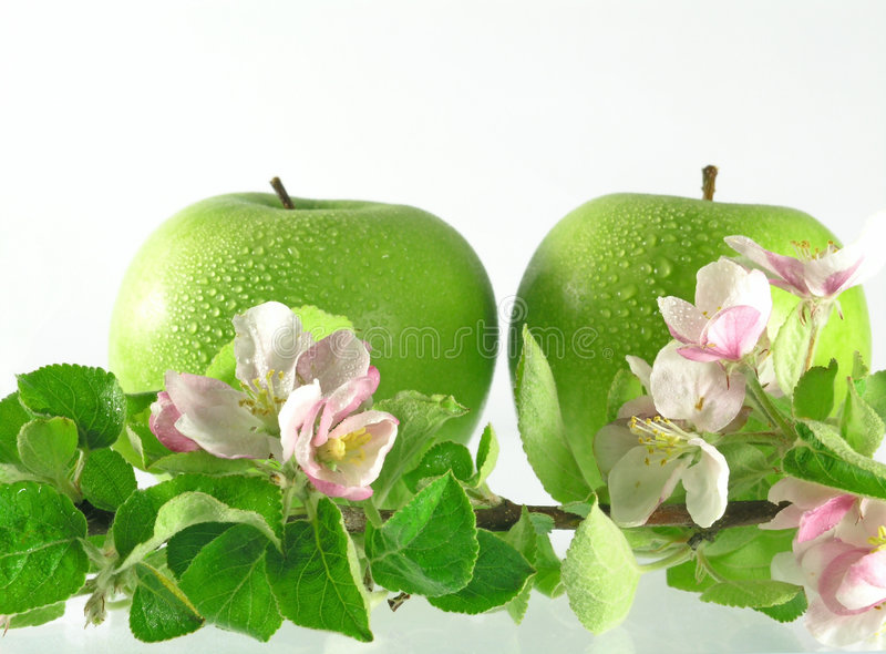 Branch - apple tree stock images