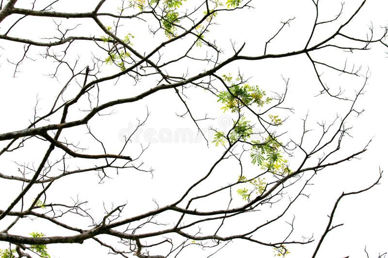 Branch stock image