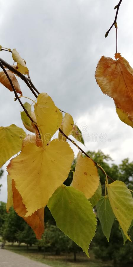A branch of autumn yellow and red leaves against the sky. Calm light autumn mood.. royalty free stock images