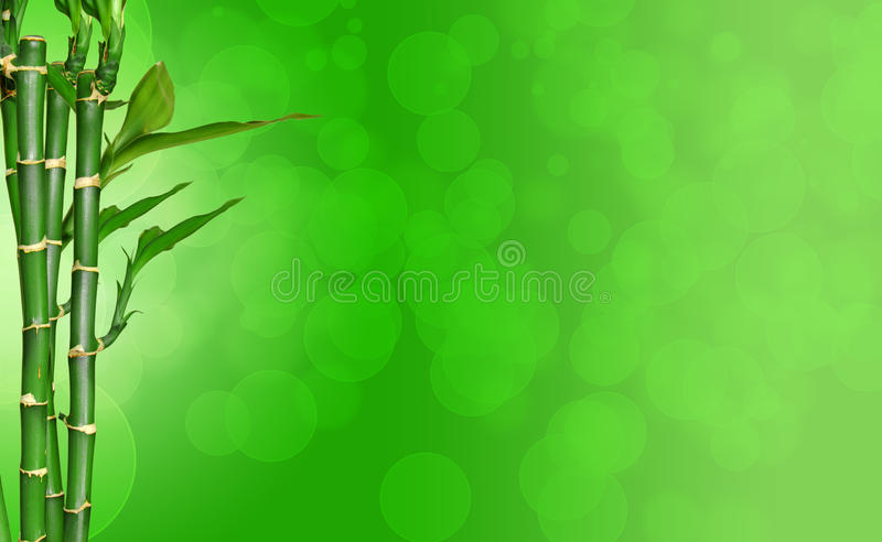Bamboo. Branch of bamboo with green background stock image