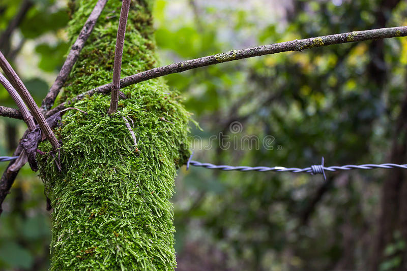 Branch and barbed wire royalty free stock photo