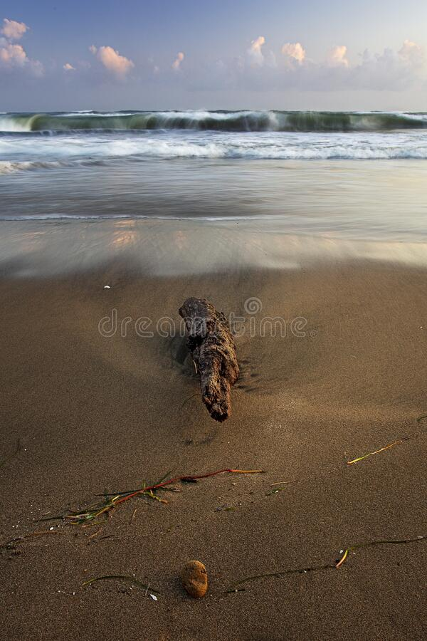 Branch on the beach with rough sea at sunset stock image