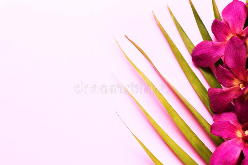 Branch of beautiful orchid flowers with palm leaves on pink background. stock image