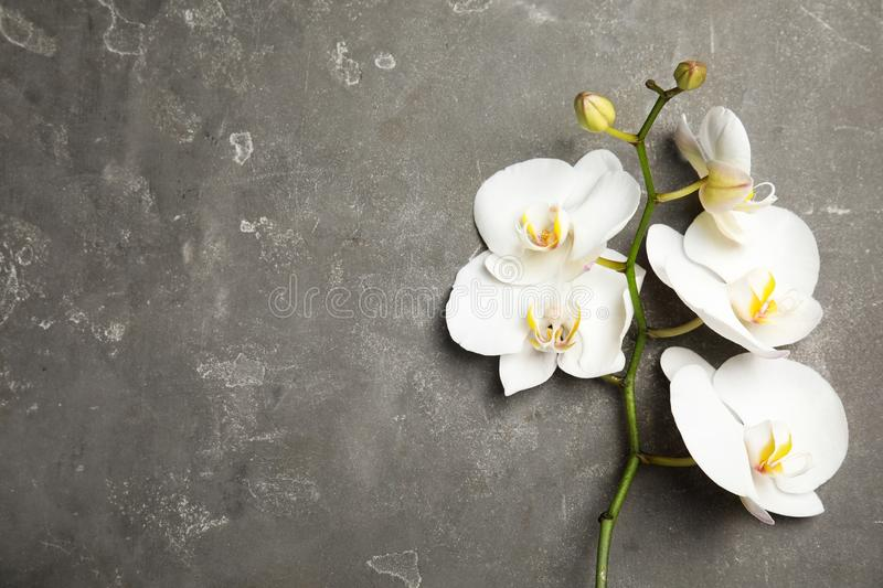 Branch with beautiful tropical orchid flowers on grey background, top view stock photos