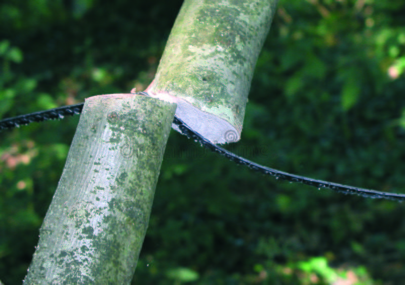 Branch Being Cut Free Stock Photos